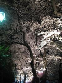 Chidorigafuti5