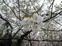 Mukoujimahyakkaen_somei_ooshimasaku