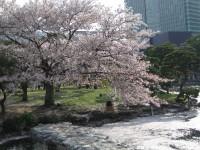 Sibarikyusomeiyoshino2008_01_2