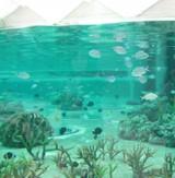 Seaworldaquariume080420_5