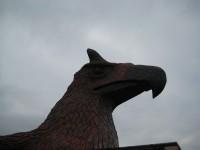 Eagle081005