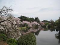 Sakuranakaike_gyoen_090406