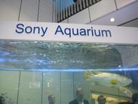 Sonyaquarium01