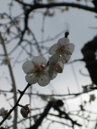 Hakubai_2_20100202