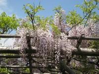 Awafuji2_20100430