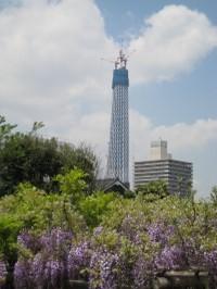 Fuji_skytree_20100430