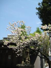 Komainukatori_20100430