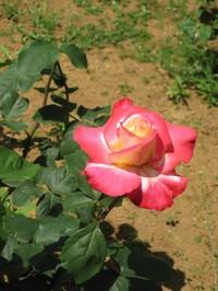 Bara5_20100508