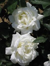 Masayuki_20100517