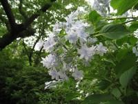 Hanabi_20100621