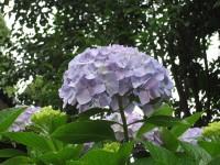 Purple_20100621