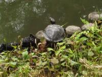 Turtle_20100621