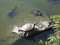 Turtle20101001