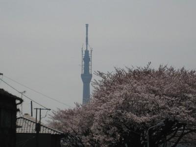 Sakuraskytree2_20110407_3