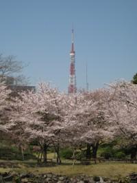 Tokyotowersakura_20110413_2