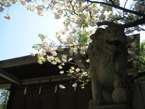 Komainu_20110426
