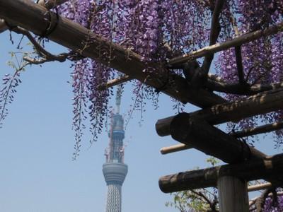 Fujidanaskytree_20110426