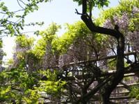 Usufuji2_20110426