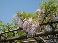 Usufuji_20110426