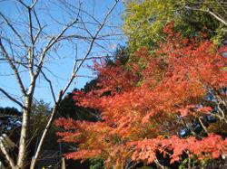 Koisihigawa02_20111204