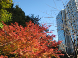 Koisihigawa04_20111204
