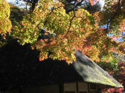 Koisihigawa05_20111204
