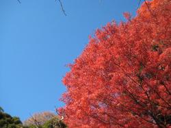 Koisihigawa06_20111204