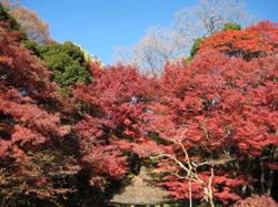 Koisihigawa09_20111204