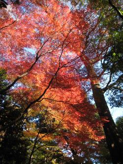 Koisihigawa12_20111204