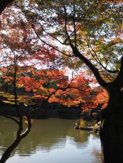 Koisihigawa15_20111204