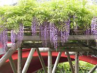 Fujitaikobashi_20120501
