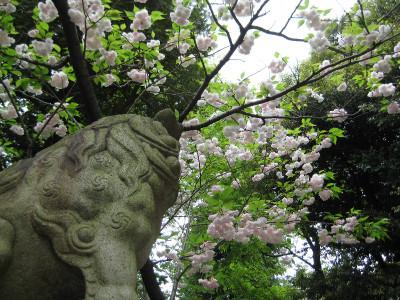 Komainu_20120501_2