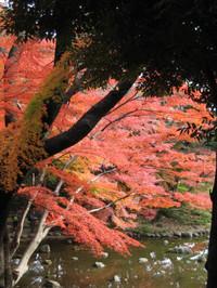Koishigawa2_121202