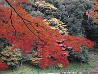 Koishigawa4_121202
