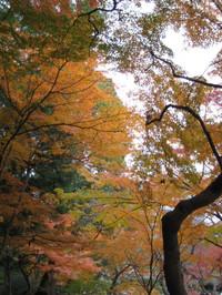 Koishigawa5_121202