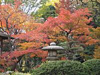Koishigawa6_121202