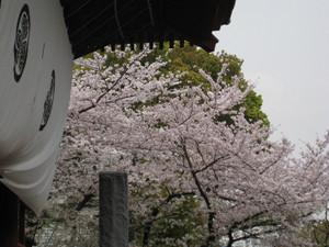 Zoujyoujigate_030329