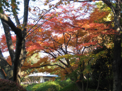 Tsutsujitei131122