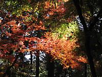 Momijiyama_131201_2