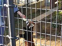 Panda_131201