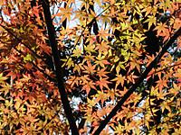 Syokubutsuen_131201_3