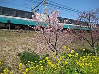 Kawadusakuratrain_140223