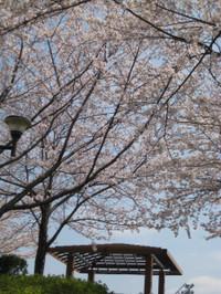 Azumaya_140401