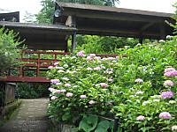 Ajisaiwatarirouka_140610