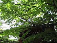 Akamon_140610