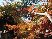 Hondoji2_141123