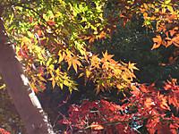 Hondoji4_141123