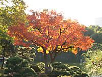 Kiyosumikouen1_141115