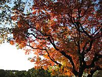 Kiyosumikouen2_141115