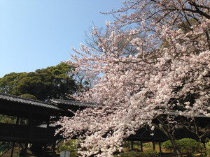 Hokederakairou2_150330